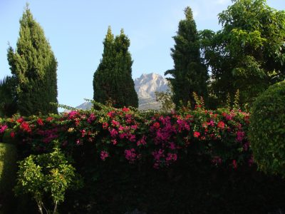 view-to-the-mountains-from-the-nothside-of-the-estate